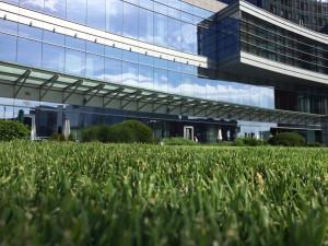 ふかふか芝生