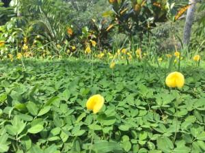 開花の喜び
