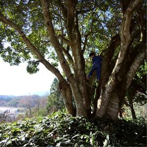 大樹の恩恵